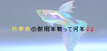 熱帯魚の勘定科目と法定耐用年数は何??